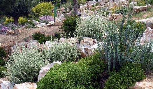 jardi-botanic.jpg