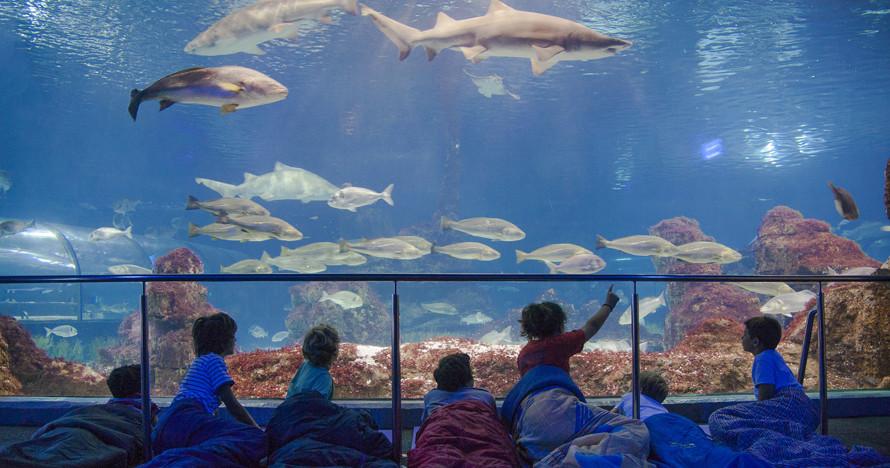 aquarium_barcelona1.jpg
