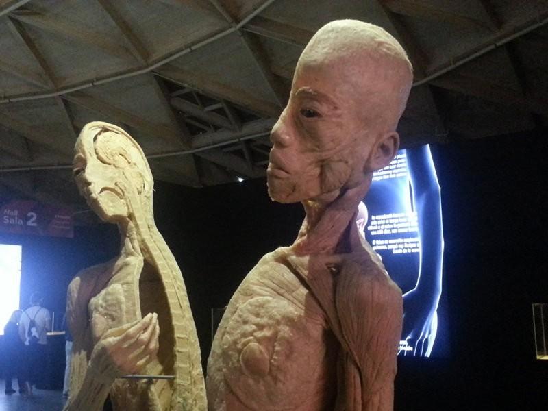 Human-Bodies1.jpg